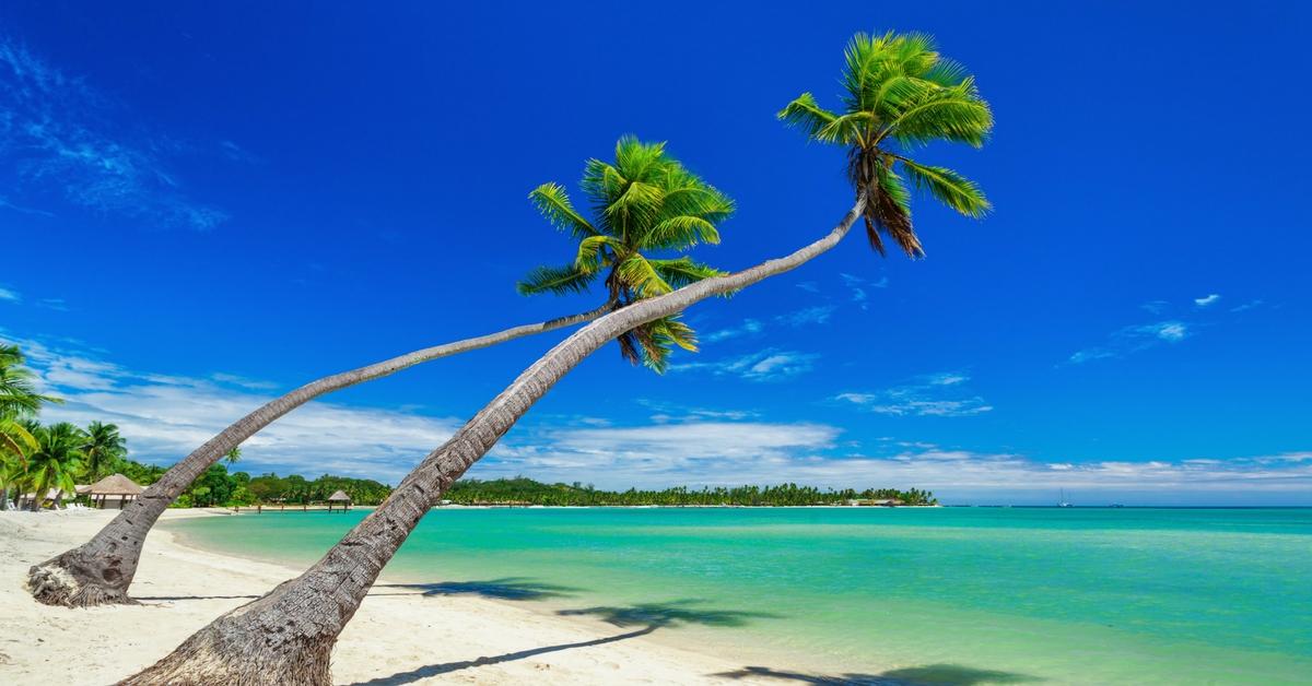 fiji shoreline palm trees beach sand water